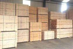 pinus madeira para embalagem